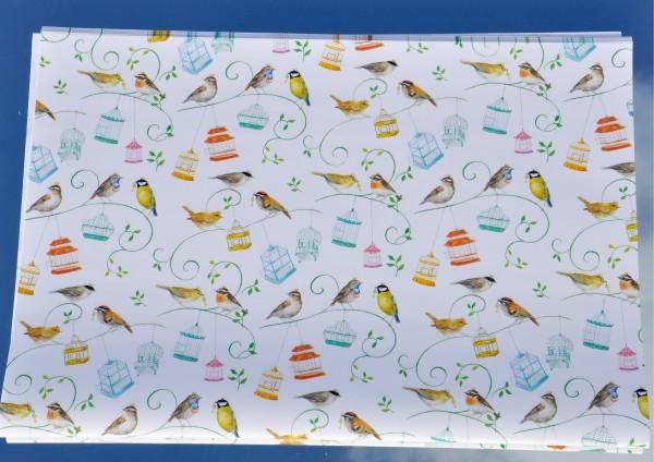 Bunte Vogelwelt - Geschenkpapier